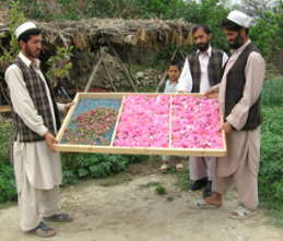 Dr Hauschka Rose Project Rose Drying in Afghanistan Beauty Over 40
