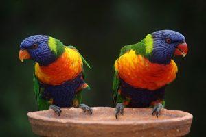 Celebrating Australia Beauty Over 40