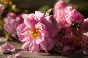 Rose Scented Gifts for Valentine's Day