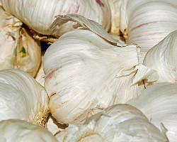Garlic Pre-Winter Health Beauty Over 40 Australia