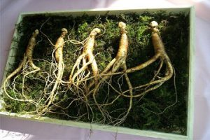 Ginseng Weight Gain During Menopause Beauty Over 40 Australia