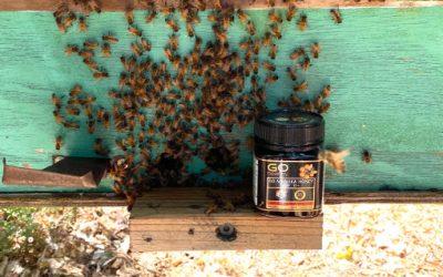 Go Healthy Go Manuka Honey