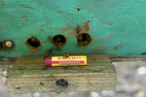 Burt's Bees Bring Back The Bees with Bee Beauty Over 40