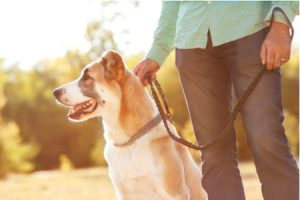 Dog Walking Shutterstock Rock & Wasp Beauty Over 40