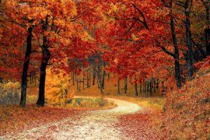 Weekend Away Autumn Pixabay Valiphotos Beauty Over 40